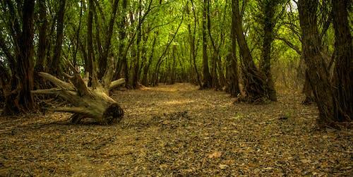 Imagine de stoc gratuită din arbore, buștean, codru, dramatic