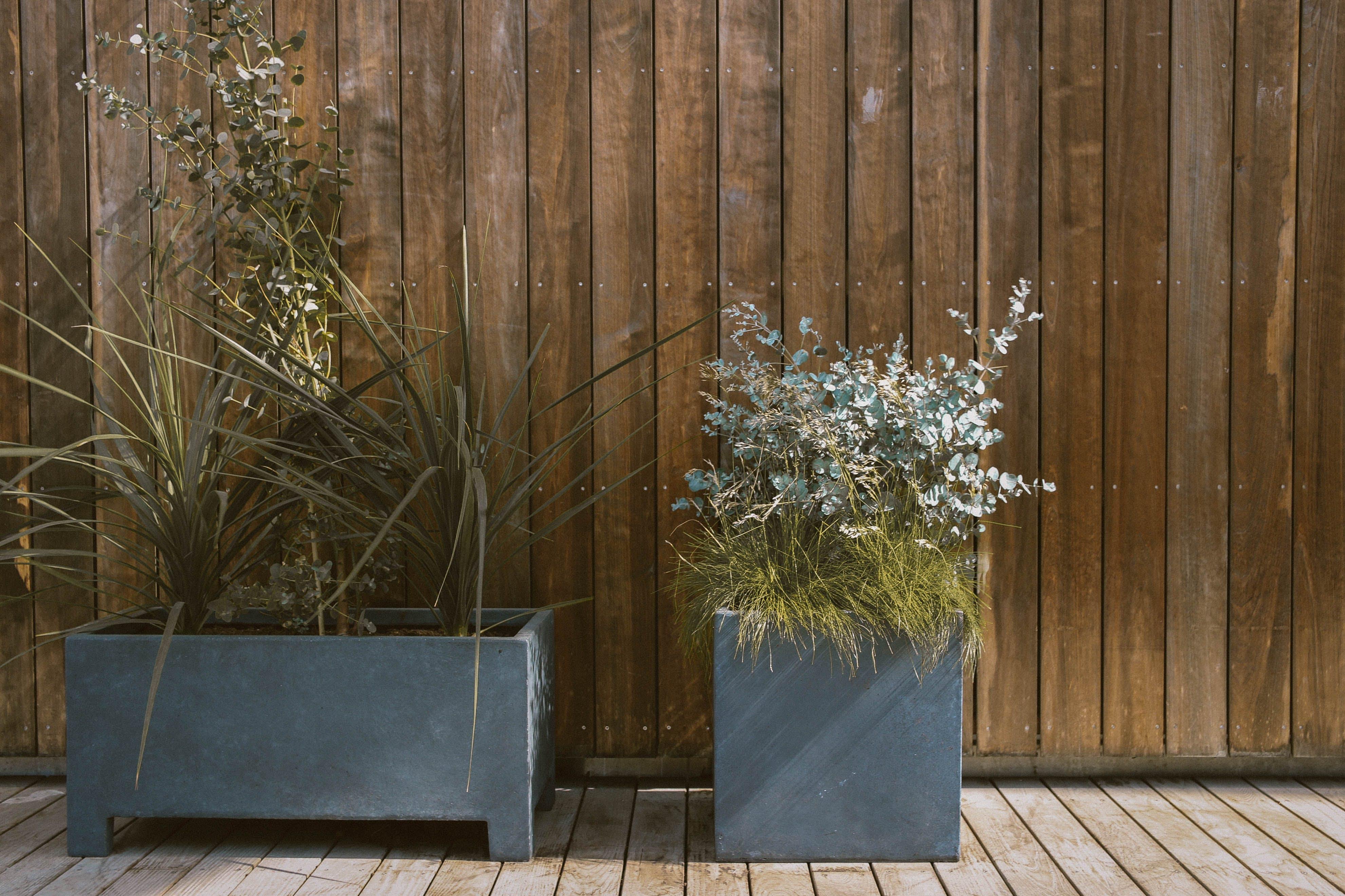 Green Plants in Gray Pot Beside Brown Wooden Wall
