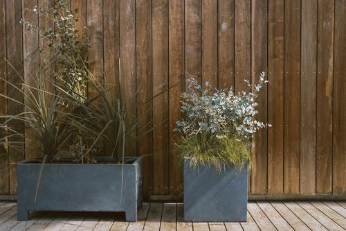Green Plants in Gray Pot Beside Brown Wooden Wall
