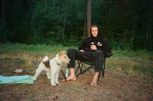 Základová fotografie zdarma na téma čistokrevný, domácí mazlíček, dospělý, les
