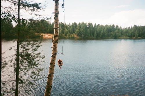 人, 假期, 夏天, 天性 的 免費圖庫相片