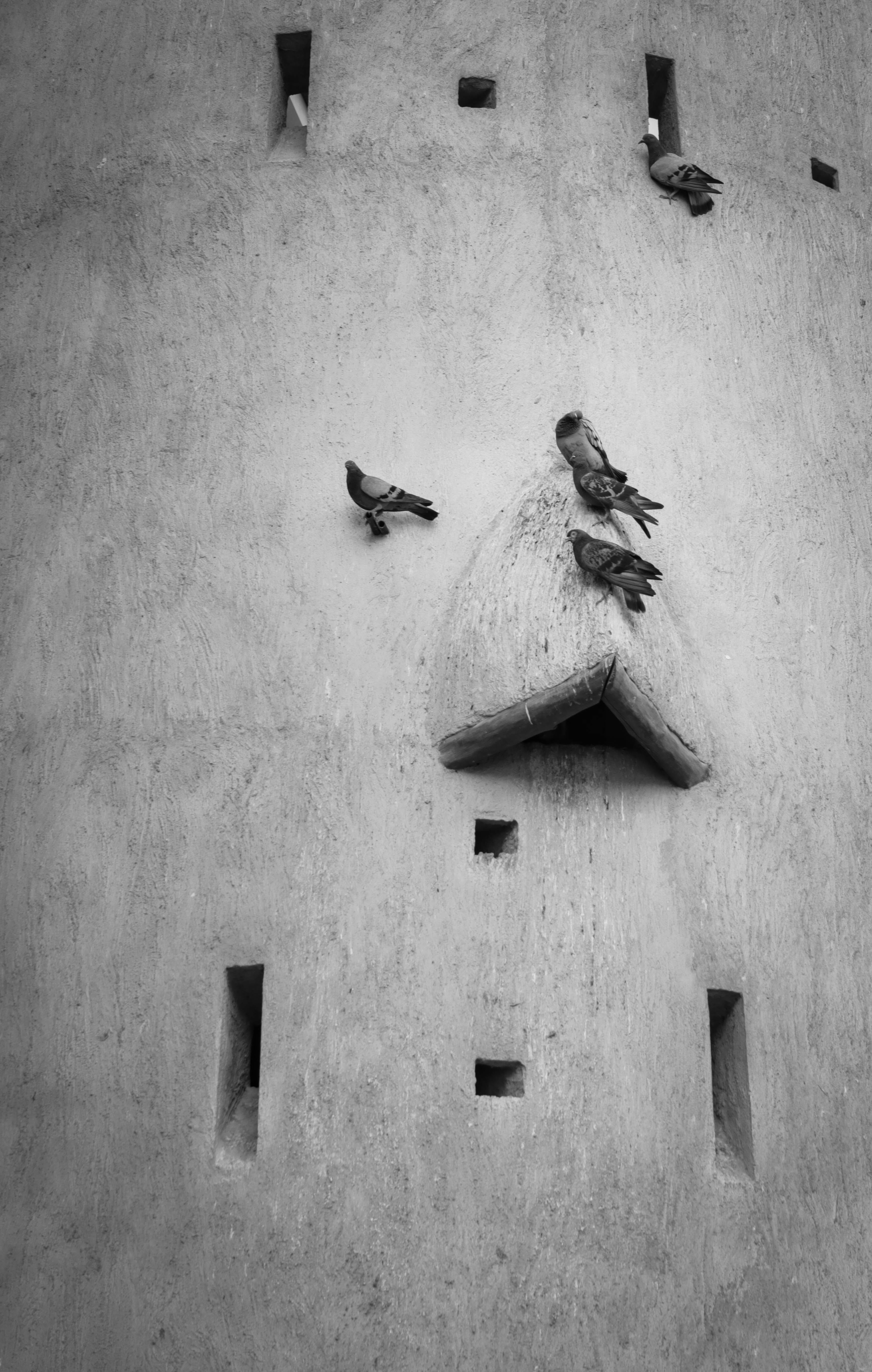 Pigeons on Concrete Wall