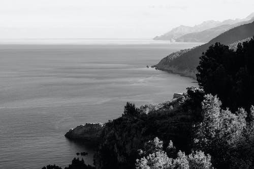 Základová fotografie zdarma na téma černobílá, moře, pláž, stromy