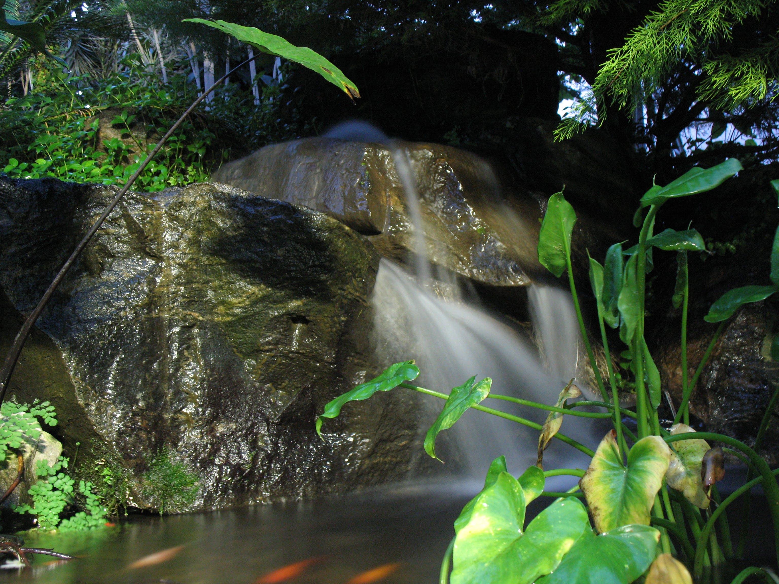 Free stock photo of environment, tropic rainforest