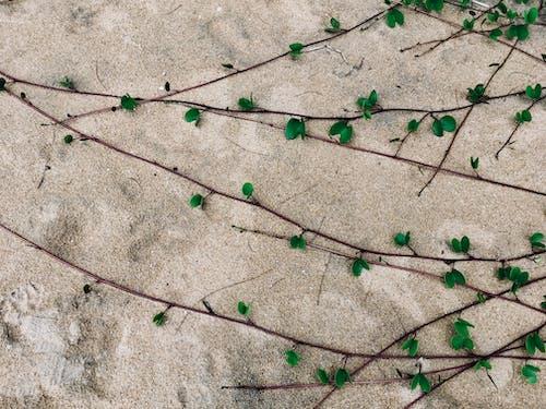 夏天, 海滩植物, 砂, 綠色 的 免费素材照片