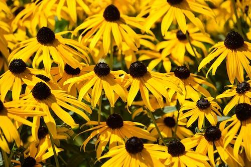 Безкоштовне стокове фото на тему «colore, fleure, noir, абсі»