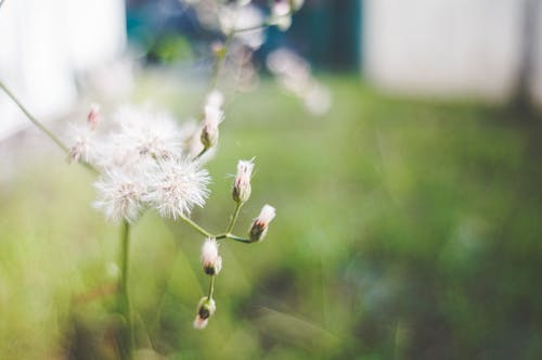 #bokeh #grass #flower #nature #greenの無料の写真素材