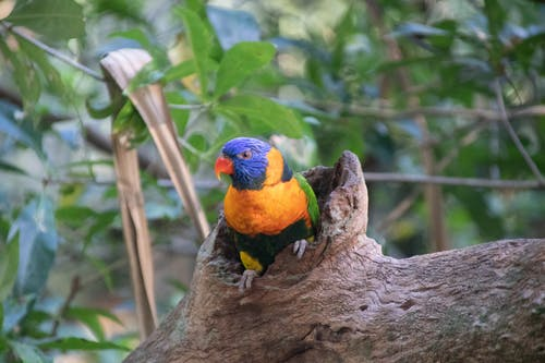 Orange and Blue Bird on Tree