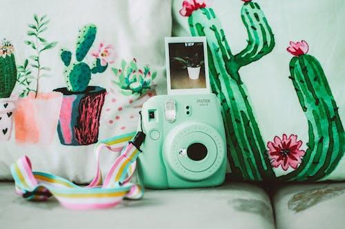 Безкоштовне стокове фото на тему «великий план, диван, дизайн, кактус»