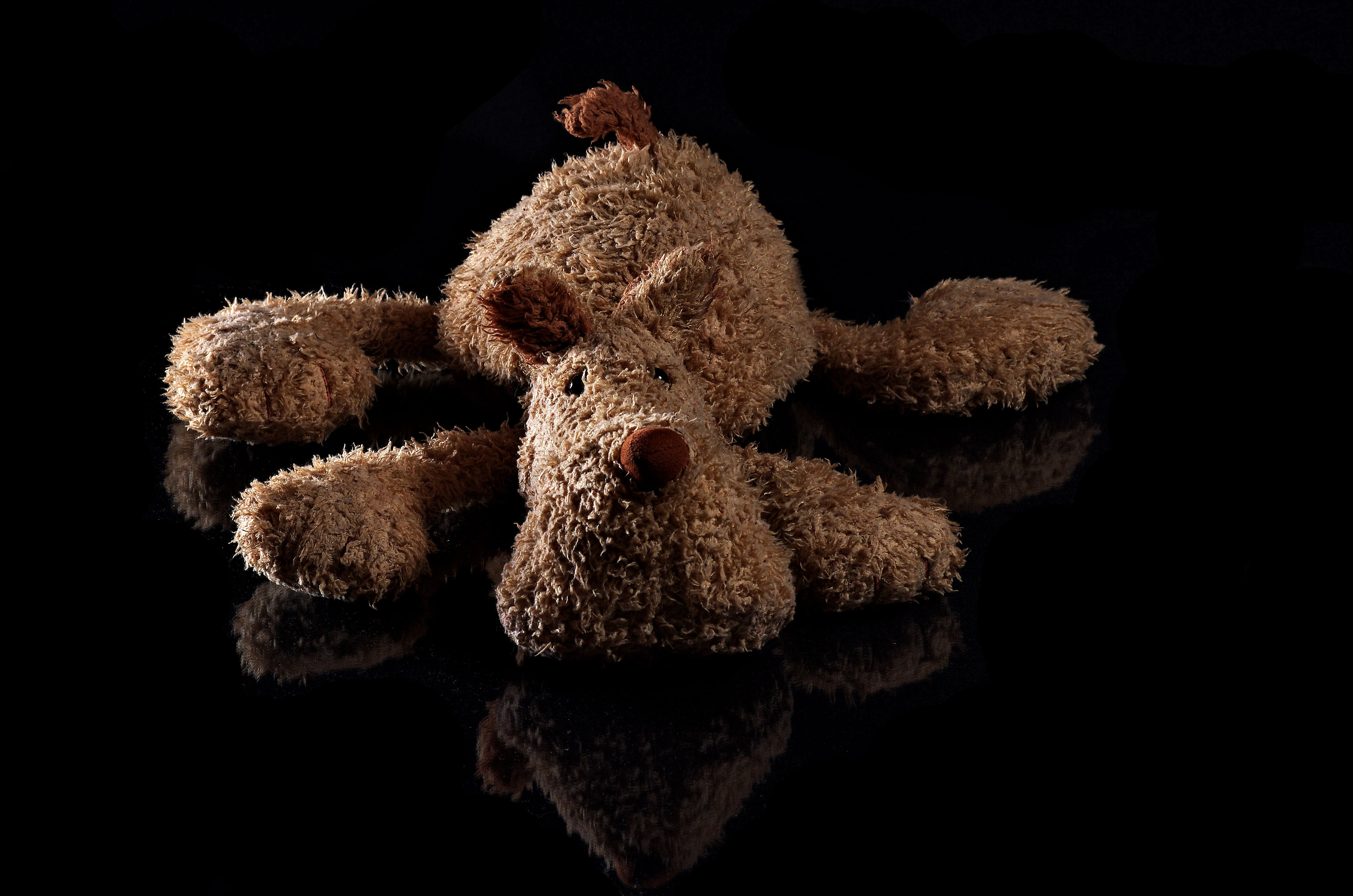 Brown Dog Plush Toy