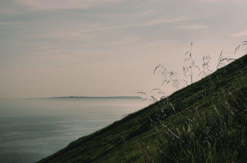 Free stock photo of coast, field, foggy