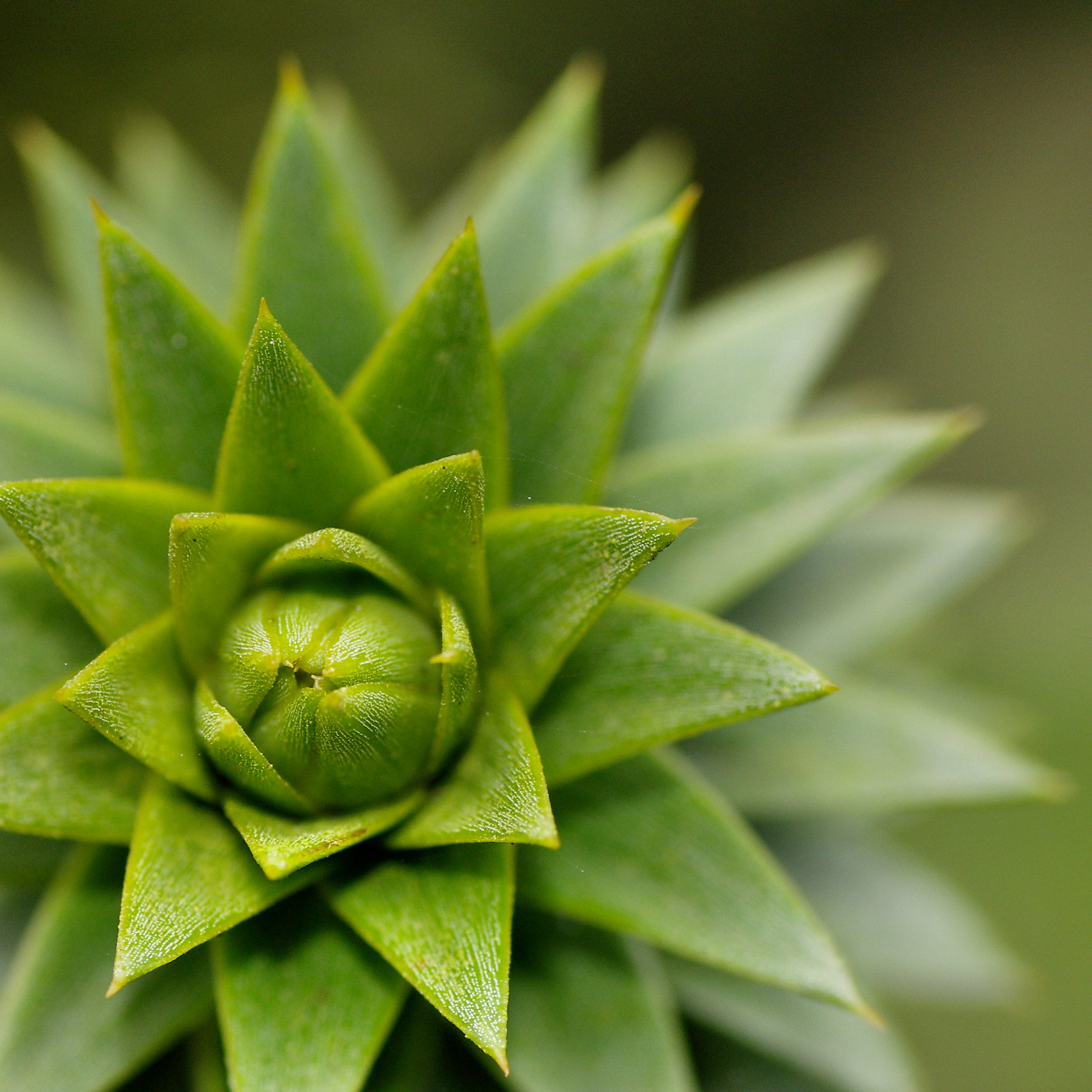 Kostenloses Stock Foto zu botanisch, farben, grün, hell