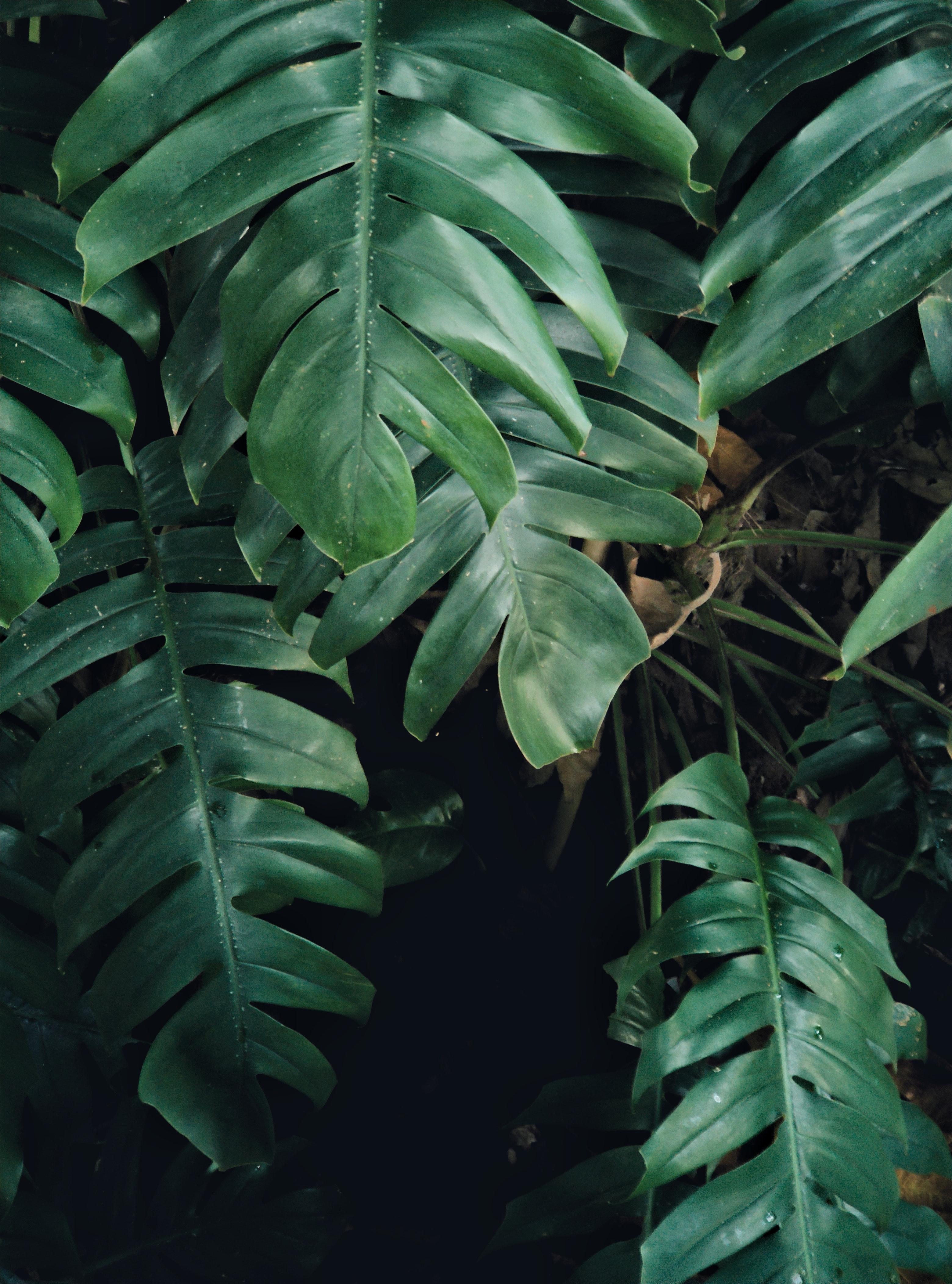 Free stock photo of Big leaf, dark, leaf