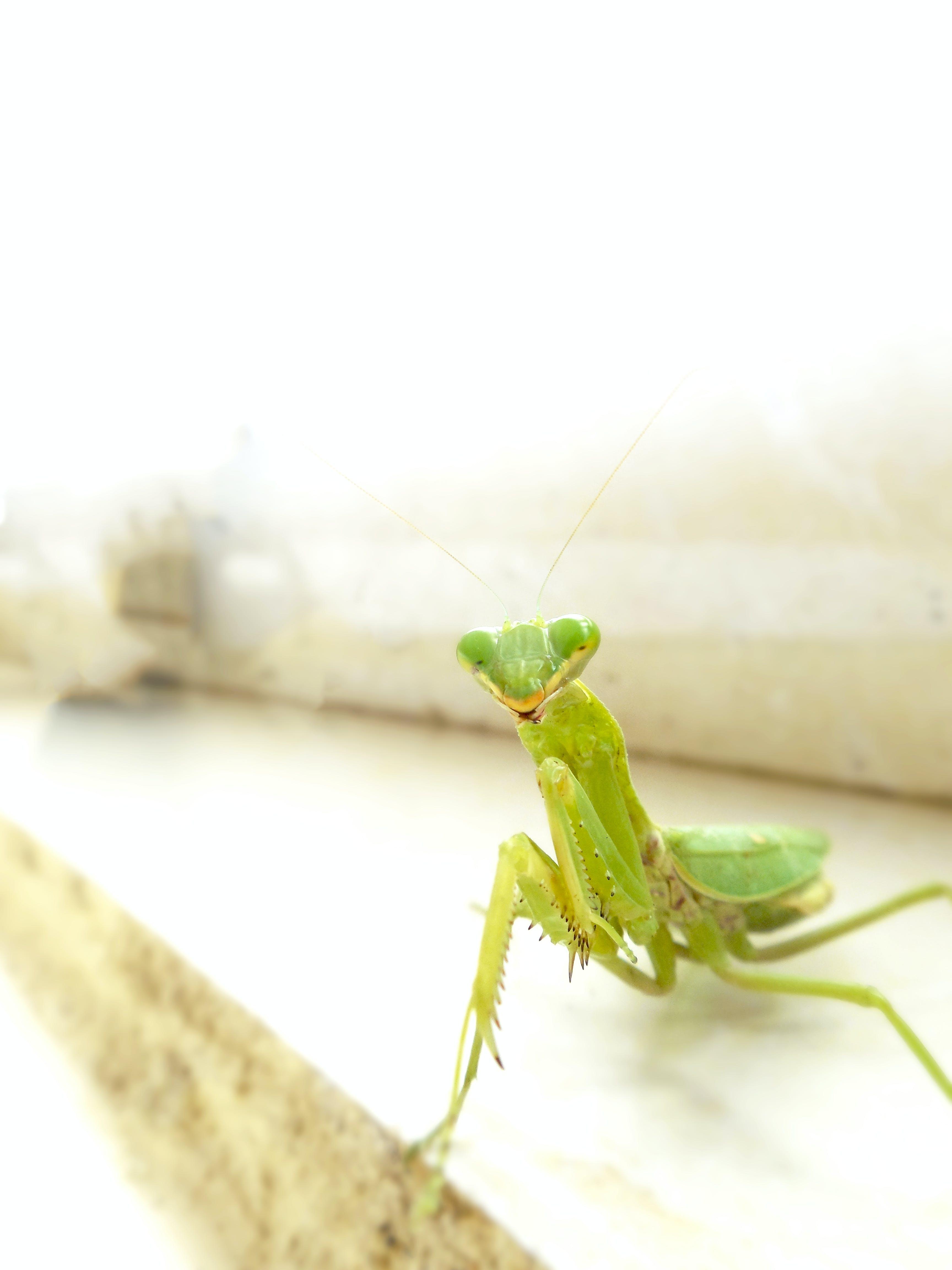 Free stock photo of grasshopper, green, smiling, vivid color