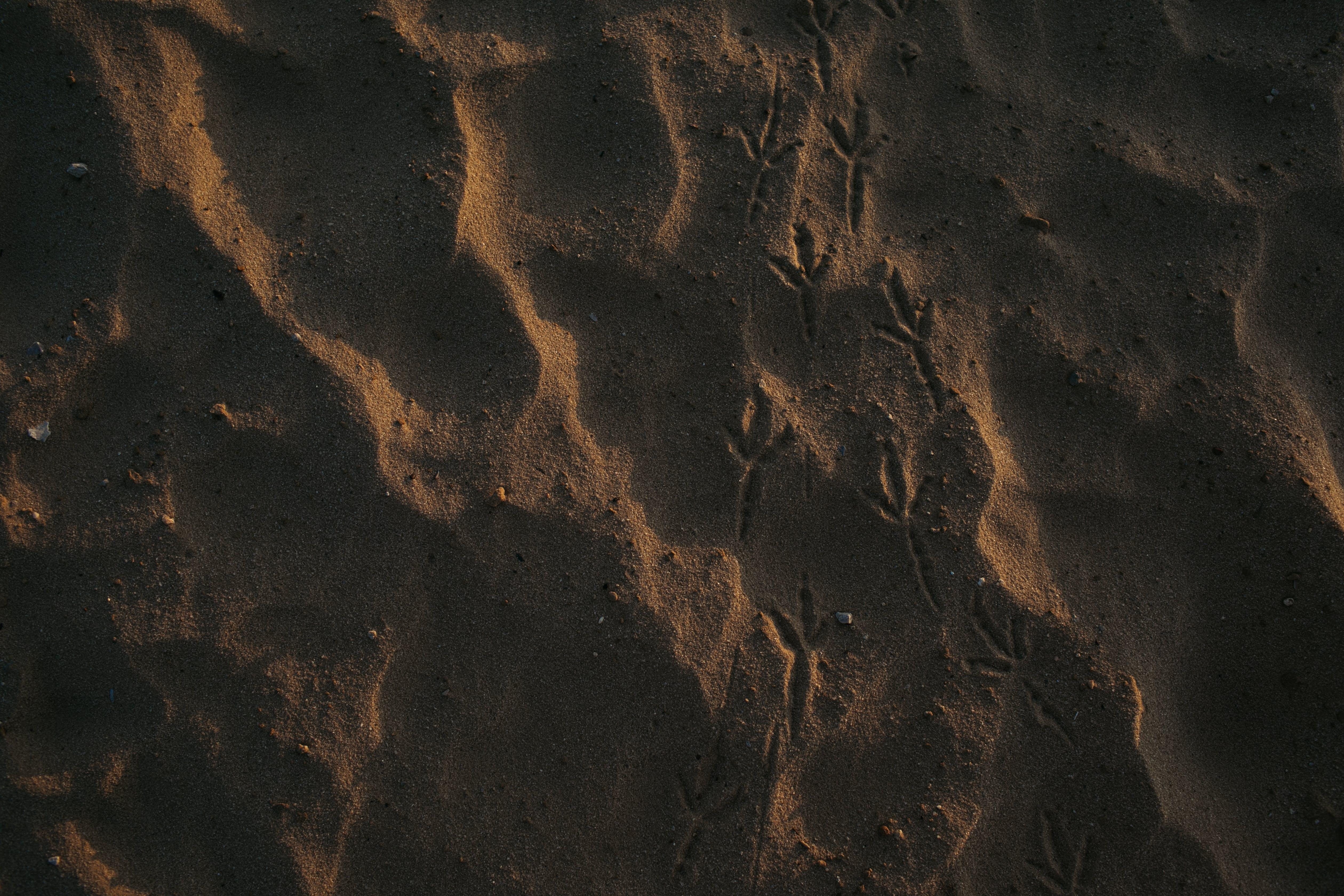 Free stock photo of beach, bird tracks, sand
