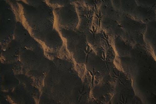 Бесплатное стоковое фото с песок, пляж, следы птиц