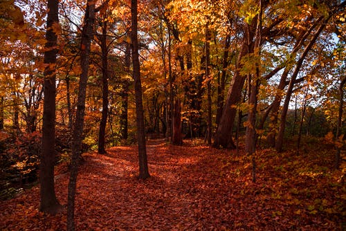 Foto profissional grátis de árvores, cênico, luz do dia, madeiras