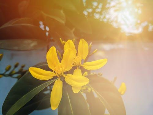 Gratis arkivbilde med blomst, gul, gyllen, natur