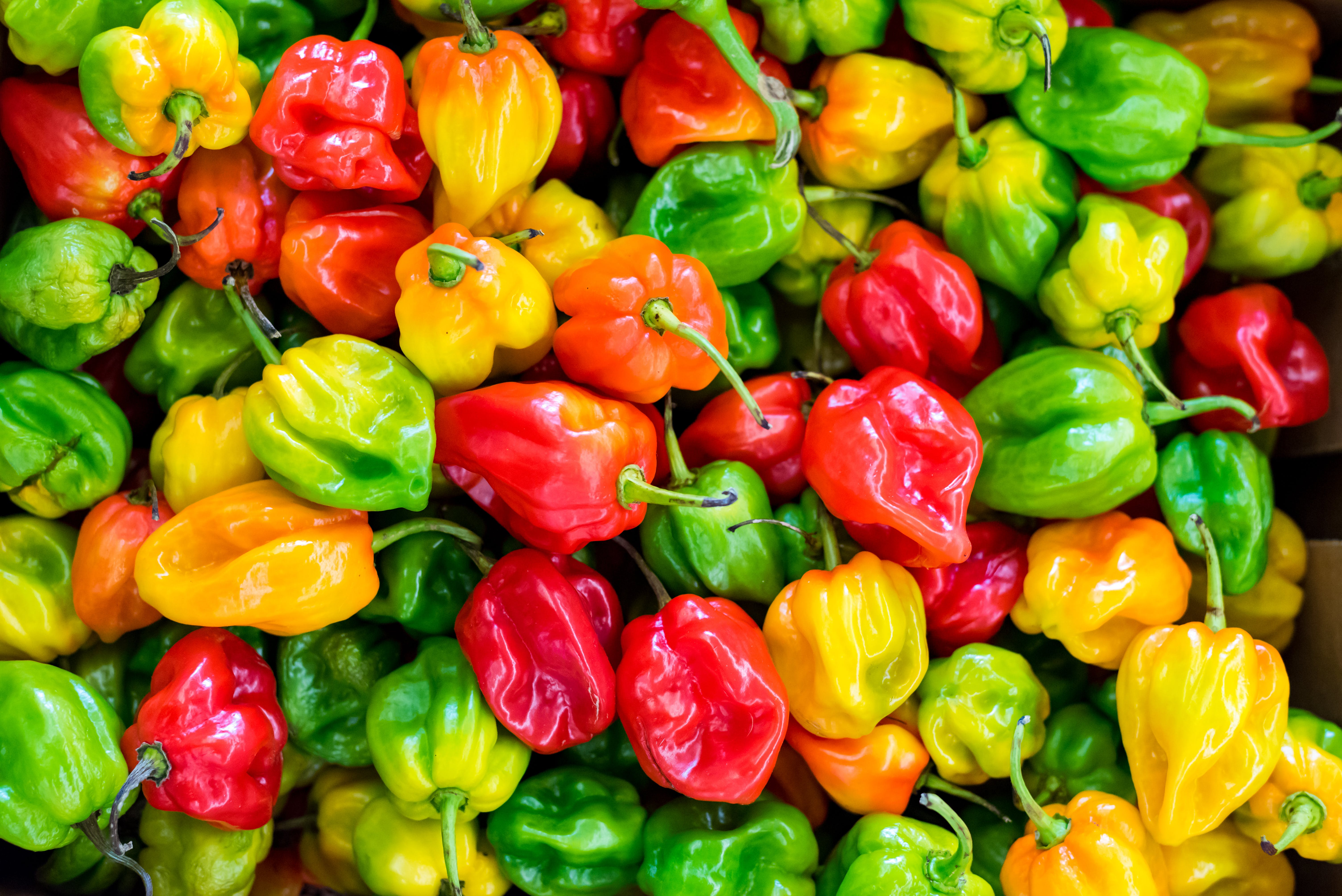 Kostnadsfri bild av chilipeppar, färgrik, färsk, frukt