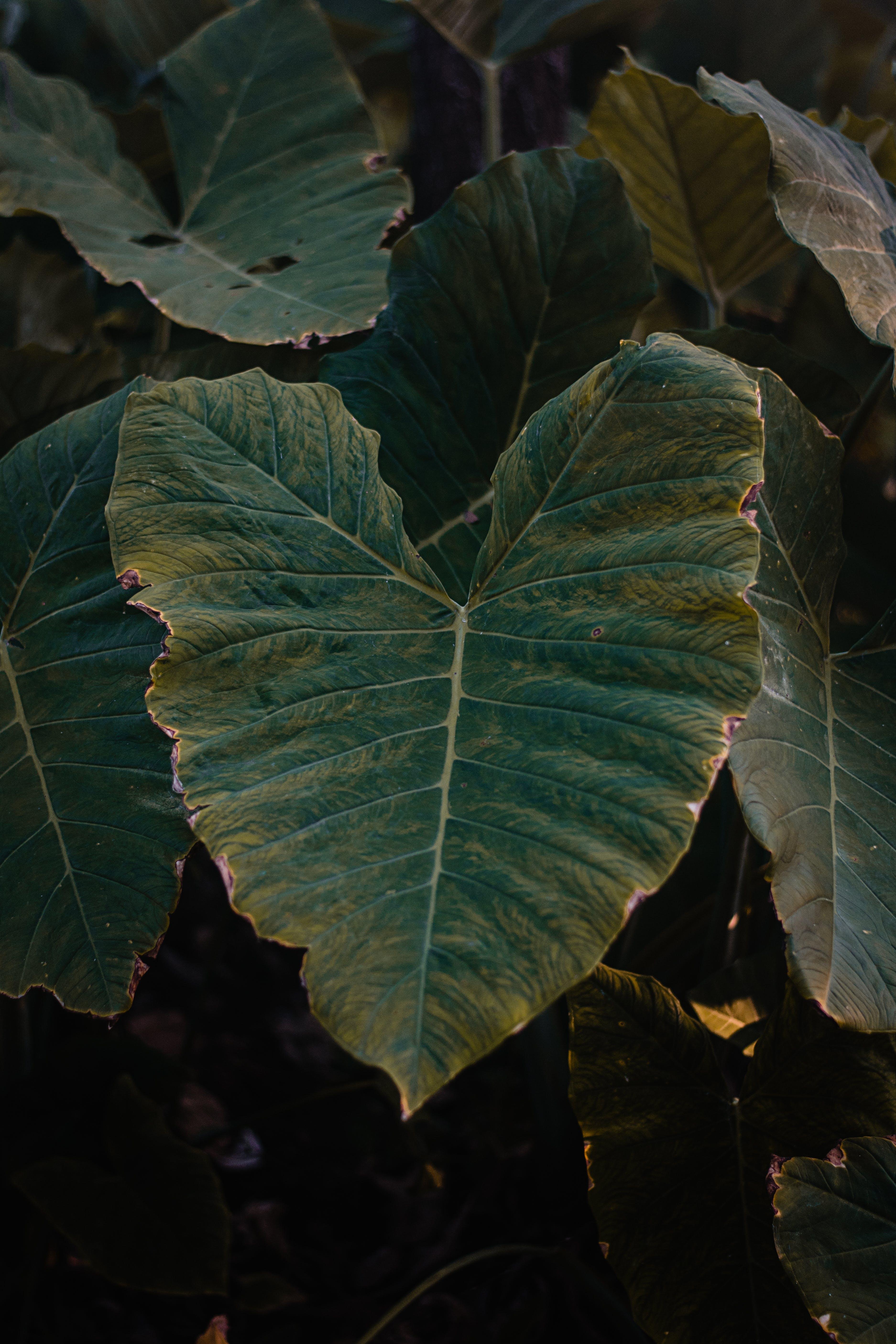 ダークグリーンの植物, 成長, 明るい, 植物の無料の写真素材