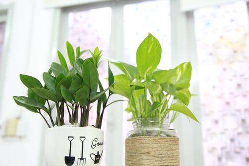 Two Green Leaf Potted Plants Near Wall