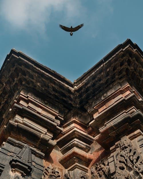 #eagle #fly #miles #to # 이동, #travel #bird #sky #wings #ancient #photography의 무료 스톡 사진
