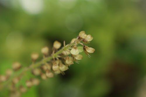 Kostnadsfri bild av blomma, grön