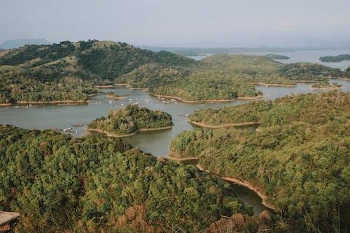 樹木包圍的水體的航拍