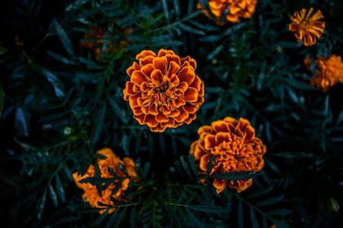 Kostenloses Stock Foto zu dunkelgrün, dunkelgrüne pflanzen, natur, orange blume