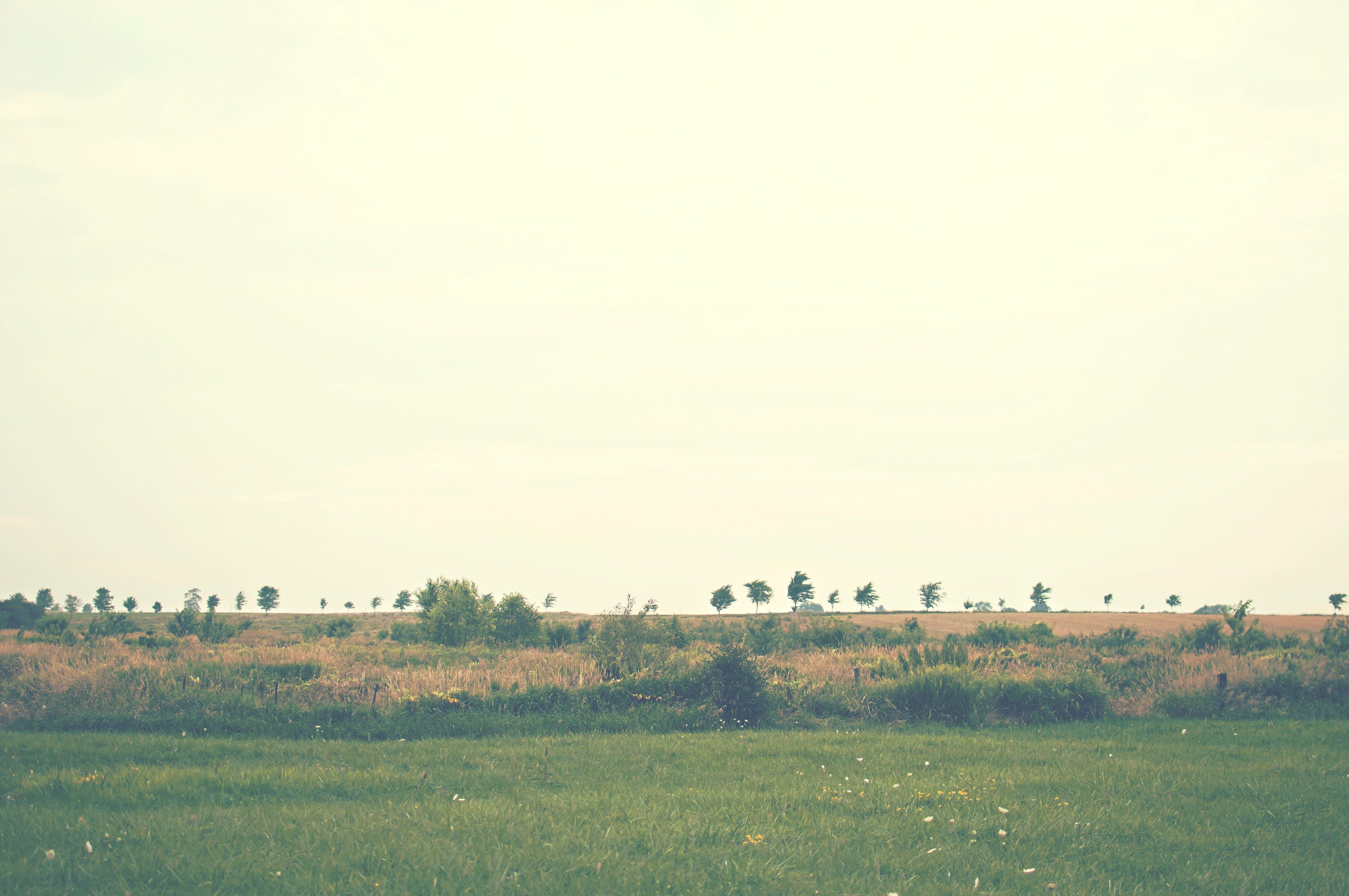 field, grass, landscape