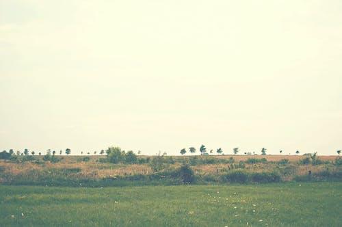 Kostenloses Stock Foto zu bäume, feld, gras, himmel