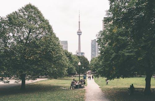 CNタワー, カナダ, シティ, トロントの無料の写真素材
