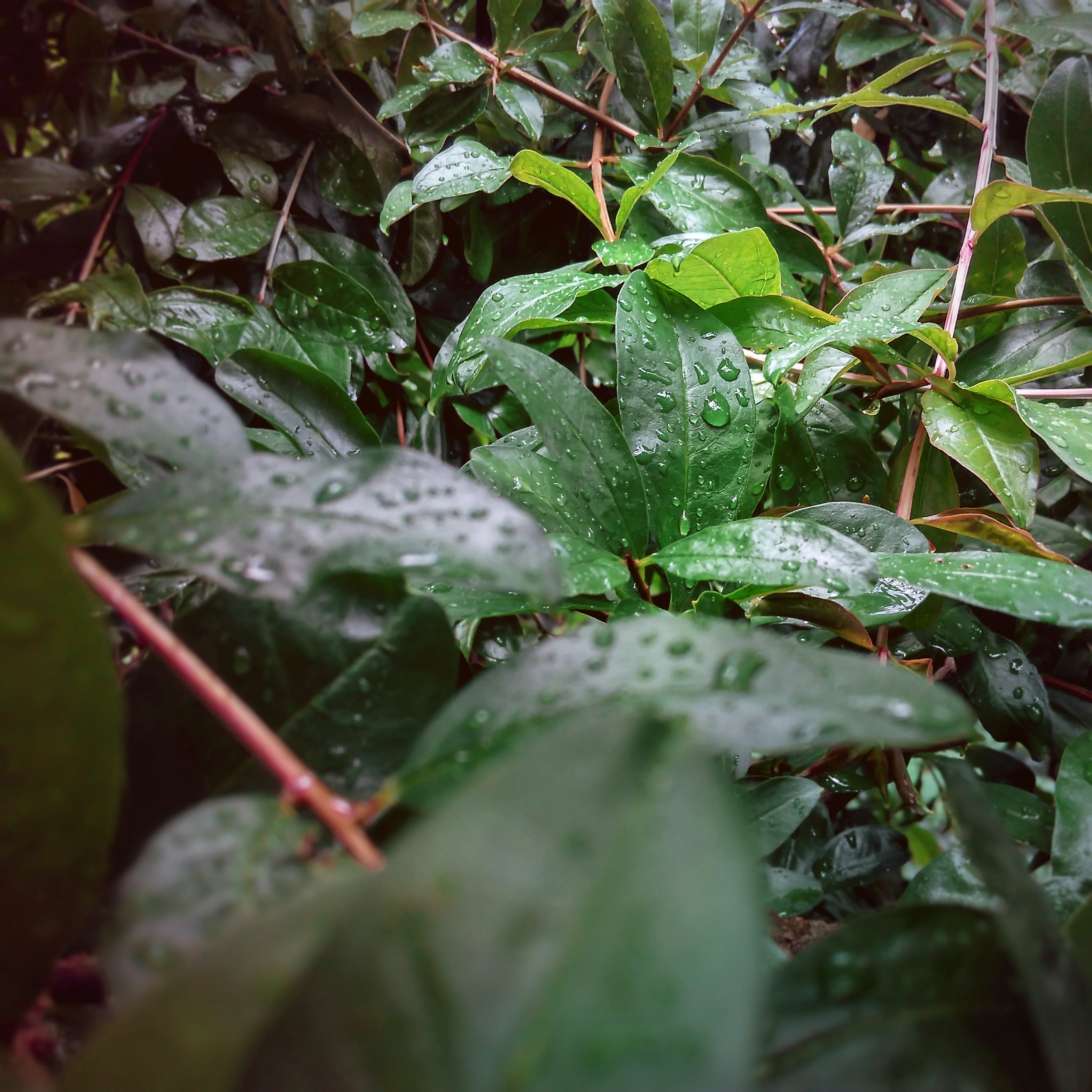 Free stock photo of after the rain, dark green, dark green plants, green leaves