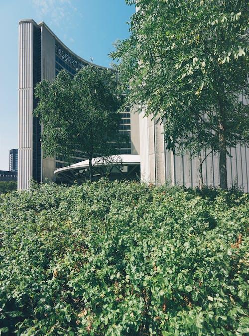 Beige Gebouw In De Buurt Van Bomen In De Stad