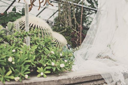 경치, 꽃, 녹색, 녹지의 무료 스톡 사진