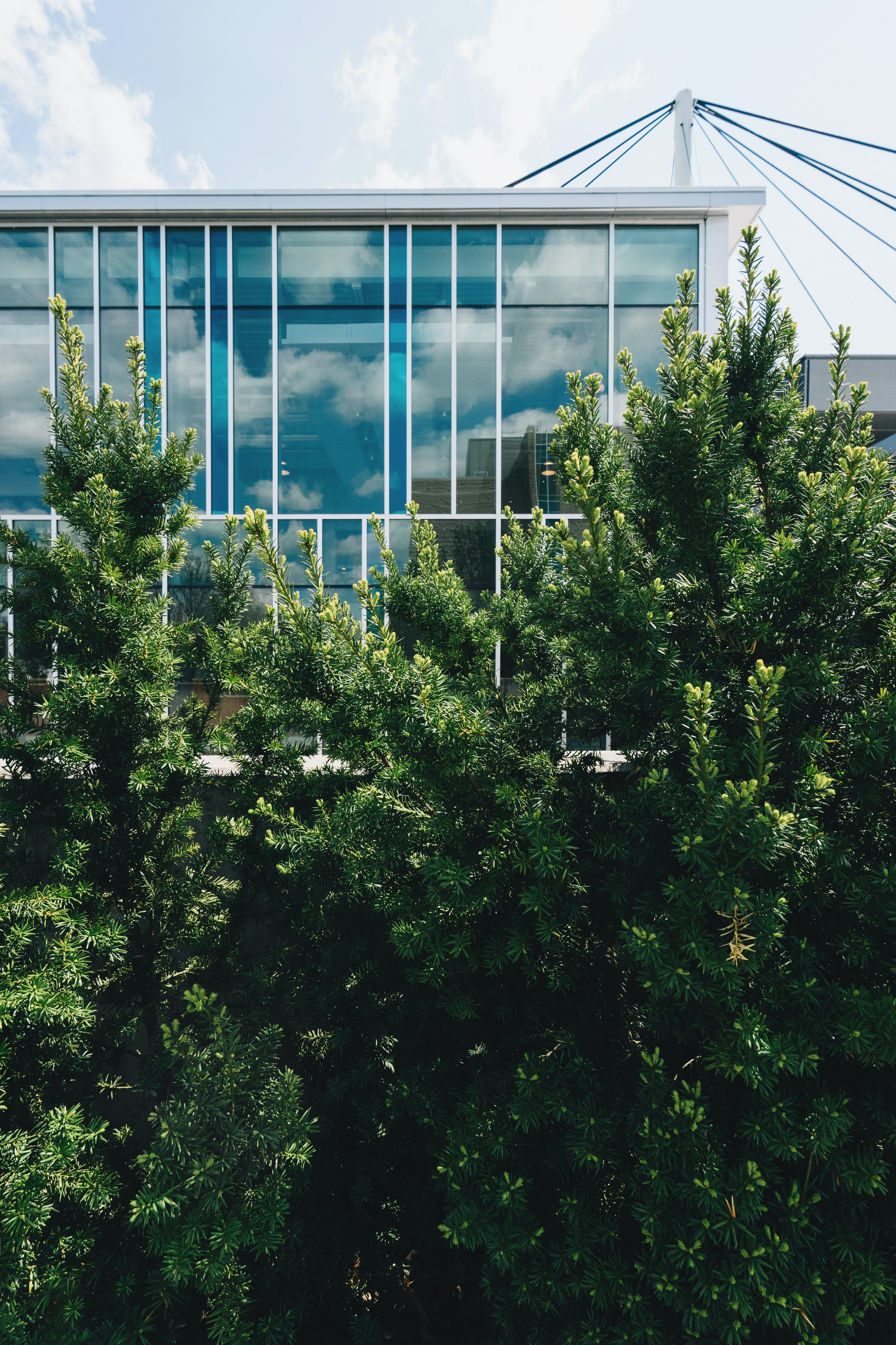Trees Near Building