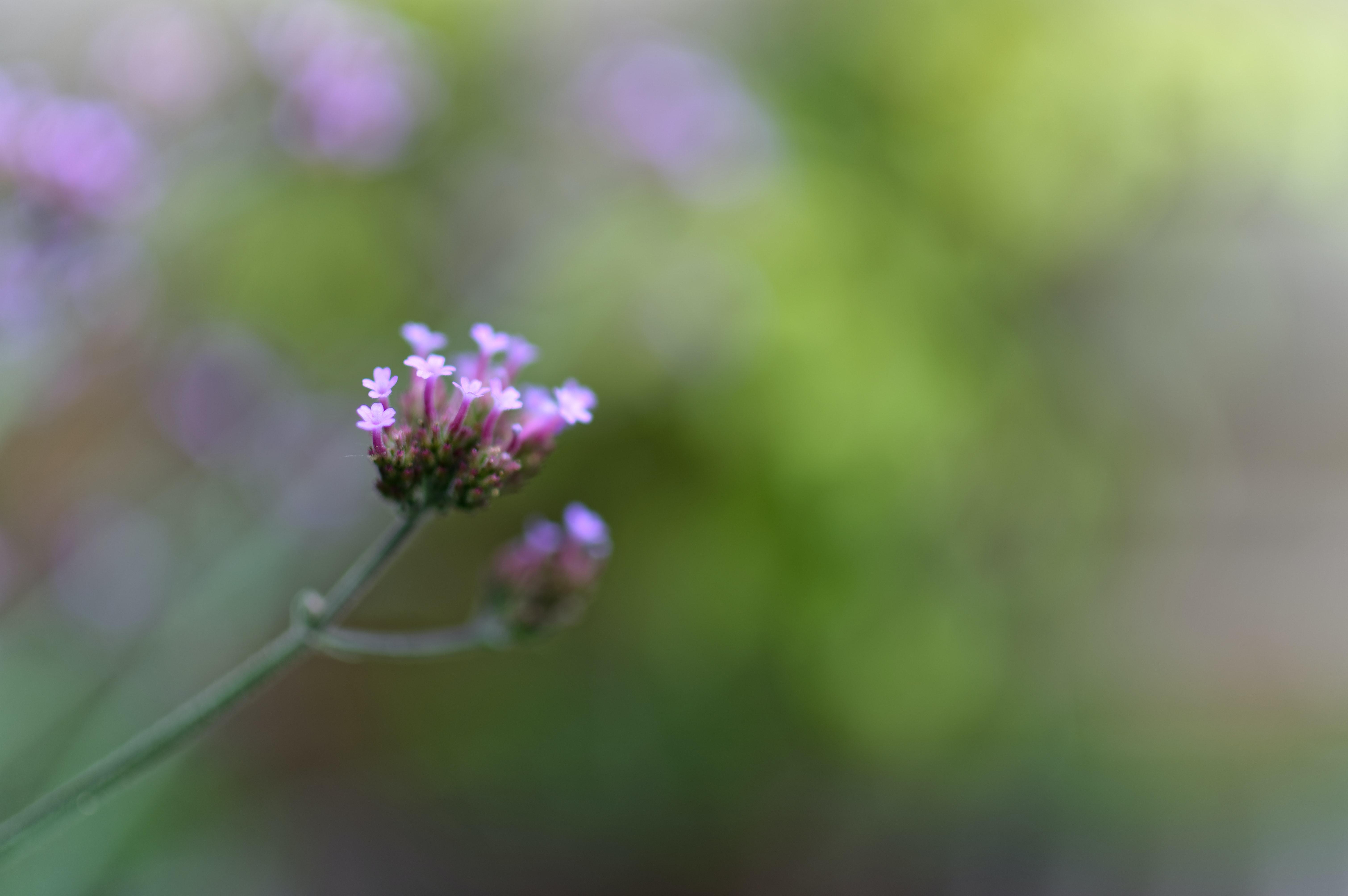 Foto Stok Gratis Tentang Alam Bunga Fokus Selektif