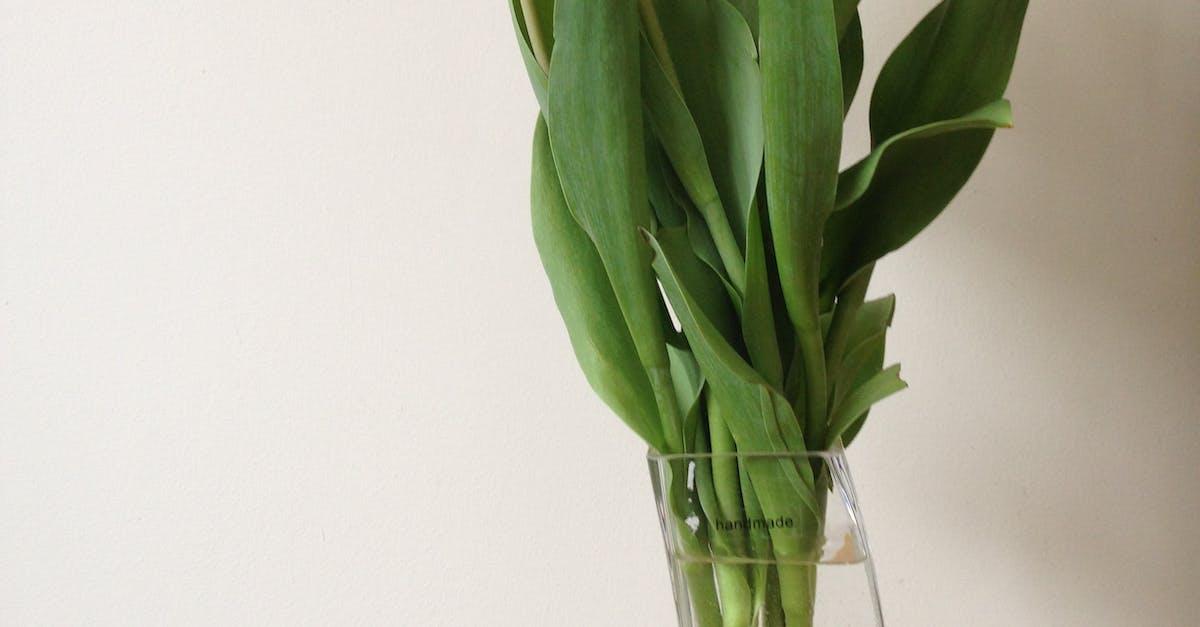 было желтые тюльпаны в вазе фото этого