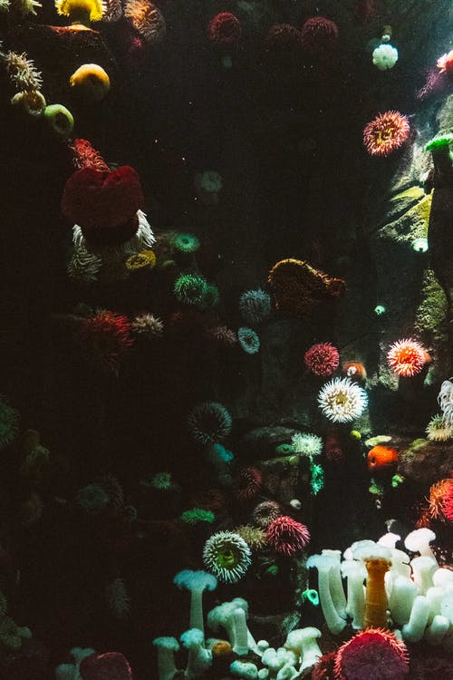 Assorted-color Corals