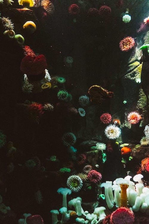 Kostenloses Stock Foto zu bunt, farbenfroh, korallen, riff