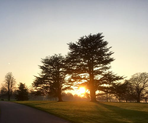 Безкоштовне стокове фото на тему «вечір, дерева, дорога, Захід сонця»