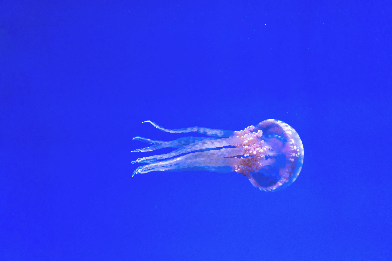 Kostenloses Stock Foto zu aquarium, baden, bewegung, blau