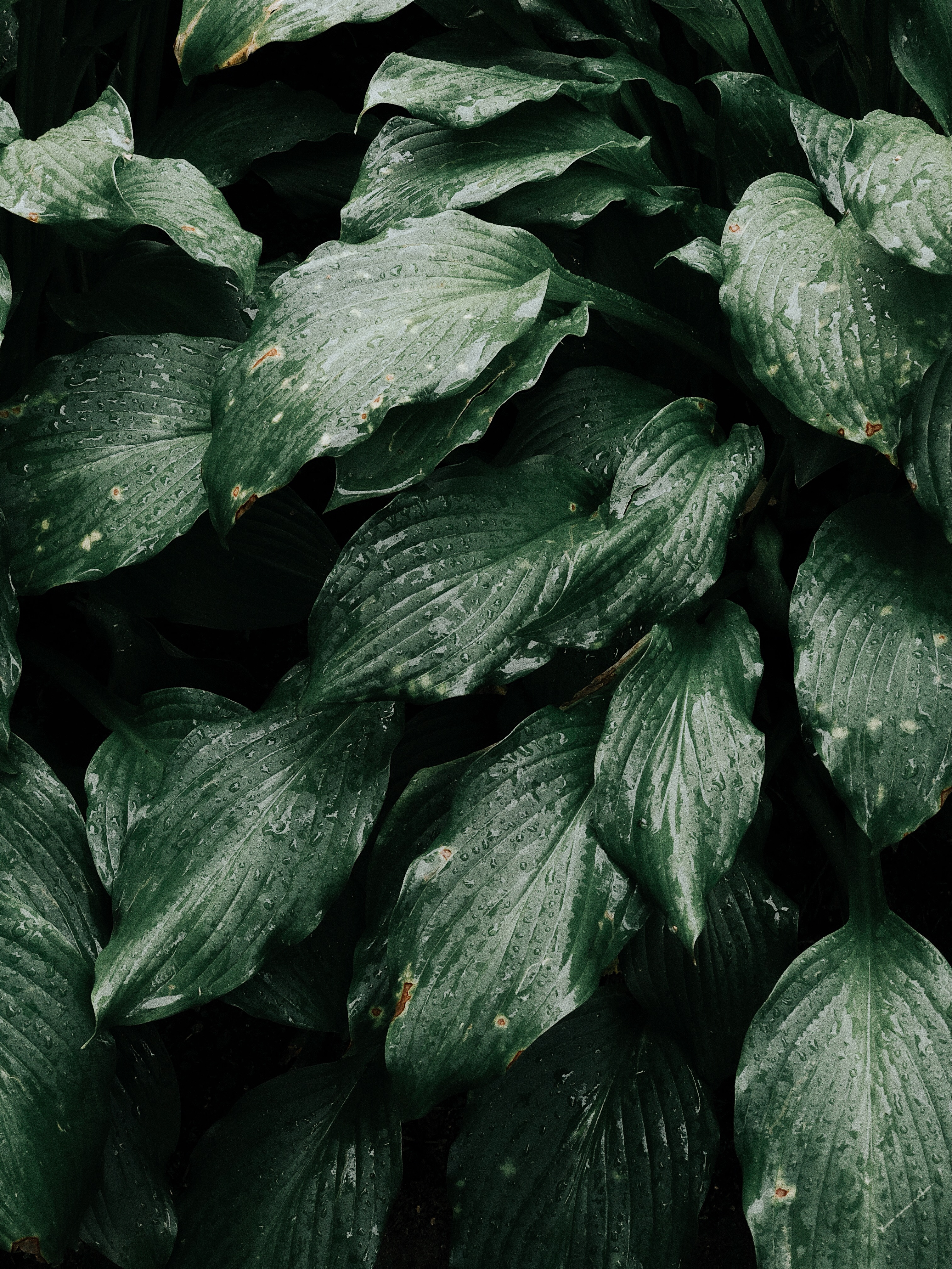 Close up photo of green leafy plant