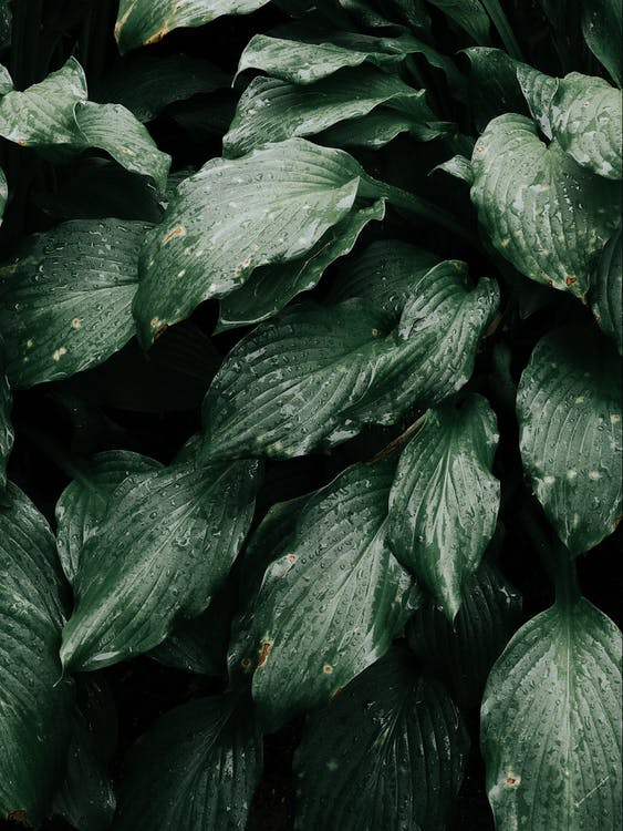 Close-up Photo of Green Leafy Plant