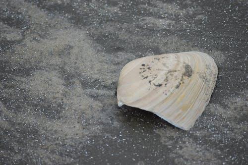 deniz kabuğu, kabuk, kırık, kırık deniz kabuğu içeren Ücretsiz stok fotoğraf