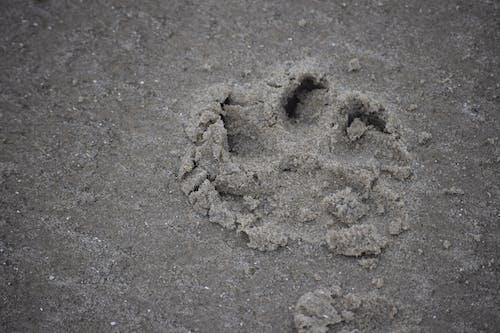 hayvan, köpek, kum, pati izi içeren Ücretsiz stok fotoğraf