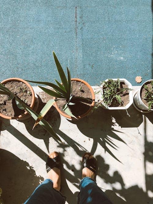 Photos gratuites de casseroles, centrales, été, flore