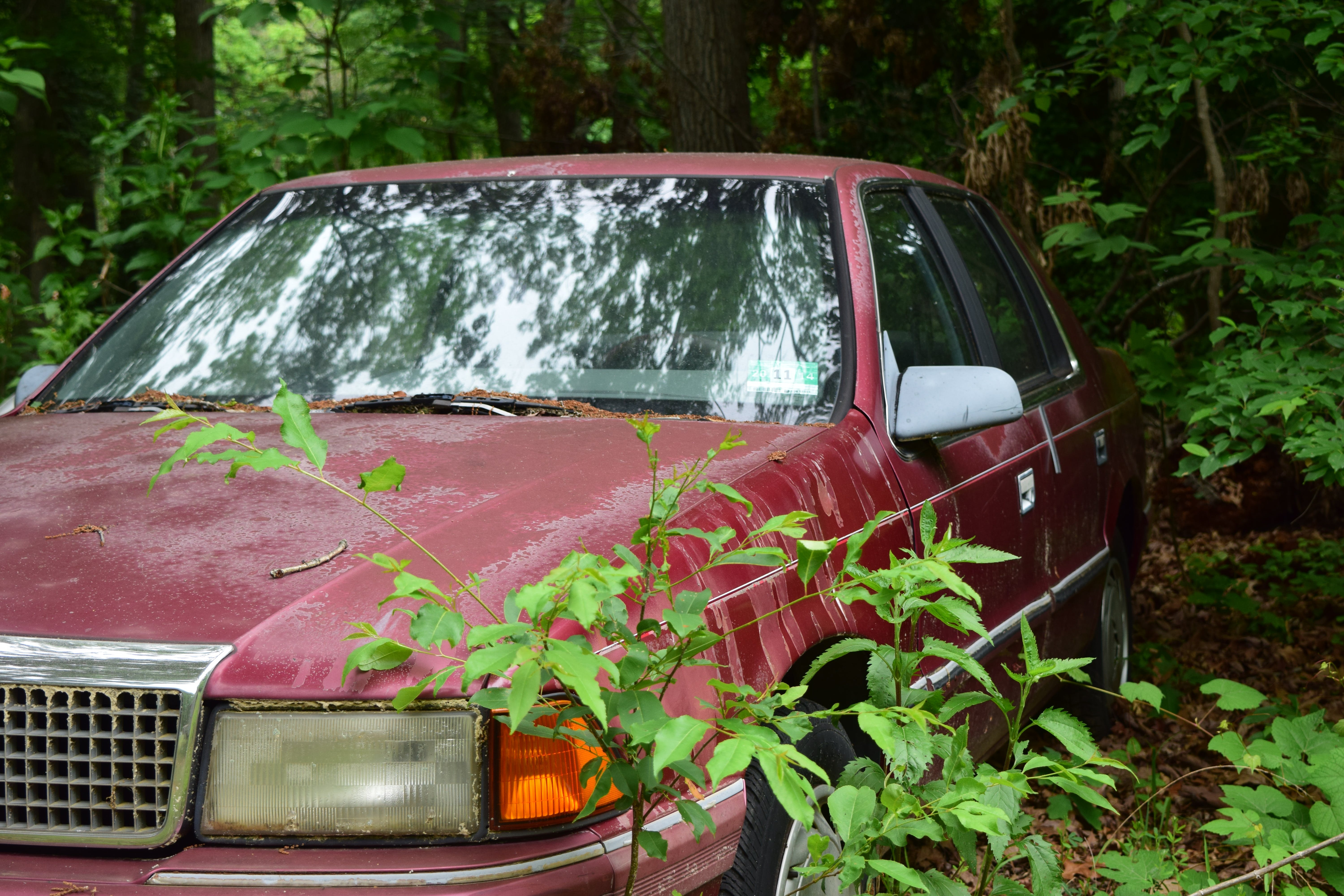 Free stock photo of abandoned, car, forest, nature