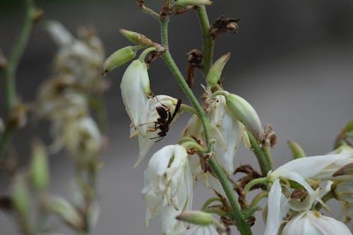 arı, böcek, çiçek, doğa içeren Ücretsiz stok fotoğraf