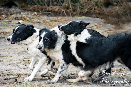 Základová fotografie zdarma na téma psi